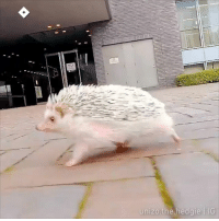 Dank, Running, and 🤖: unizo.the.hedgie IG  nizo.the.hedgie TG Me running away from the upcoming problems and responsibilities in 2019  📹 unizo.the.hedgie   IG
