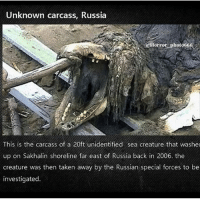 Animals, Memes, and Taken: Unknown carcass, Russia  cHorror photo666  This is the carcass of a 20ft unidentified sea creature that washe  up on Sakhalin shoreline far east of Russia back in 2006. the  creature was then taken away by the Russian special forces to be  investigated. Creds tagged. How many animals do you have? I have 19 puppers and a lotta goats -Julia
