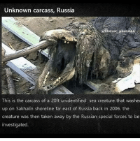 Memes, Taken, and Trash: Unknown carcass, Russia  Horrot photo666  This is the carcass of a 20ft unidentified sea creature that washec  up on Sakhalin shoreline far east of Russia back in 2006. the  creature was then taken away by the Russian special forces to be  investigated. looks like a dead crocodile with trash on me, but hey!! what you think