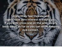 Facts, Zero, and Cross: Unless they feel threatened.  tigers have zero interest in eating you  If you ever cross one on the wild, slowly  back away as far as you can while keeping  eye contact. <p>Surprising Facts You Need To Know About Tigers (20 pics)</p>