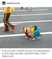 Dogs, Funny, and Today: unlikelywords  If you've seen a better picture of a dog dressed  as two dogs carrying a present today, I don't  believe vou Dead.