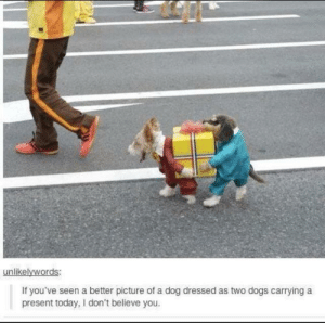 Me_irl: unlikelywords:  If you've seen a better picture of a dog dressed as two dogs carrying a  present today, I don't believe you. Me_irl