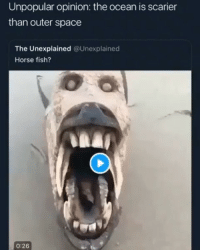 Dat nigga was prolly cute too tho @larnite • ➫➫➫ Follow @Staggering for more funny posts daily!: Unpopular opinion: the ocean is scarier  than outer space  The Unexplained @Unexplained  Horse fish?  0:26 Dat nigga was prolly cute too tho @larnite • ➫➫➫ Follow @Staggering for more funny posts daily!