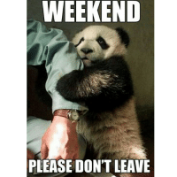 WEEKEND  PLEASE DON'T LEAVE 😟