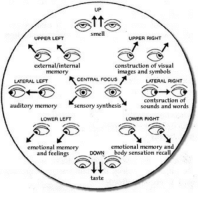 Smell, Focus, and Images: UP  smell  UPPER LEFT  UPPER RIGHT  external/internal  memory  construction of visual  images and symbols  CENTRAL FOCUS  LATERAL LEFT  LATERAL RIGHT  auditory memorysensory synthesis  contsruction of  sounds and words  LOWER LEFT  LOWER RIGHT  emotional memory  and feelings  emotional memory and  body sensation recall  DOWN  taste <p>I see&hellip;</p>