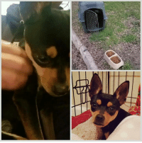 Love, Memes, and Taken: Update : ( 09-18-19 ) Regarding dog found at park during routine searches.( Fort Worth , Tx )   This video was taken once she was rescued and taken to safety. Since then she's come around ..  I've seen alot , I've found a lot and some things you just can't unsee !  Before, I go any further I would like to THANK all of our supporters who help us with #TheAbandonedOnes . Our #Team of fosters and volunteers , I can't Thank you enough !   Now , as for this specific rescue ...her dumping by heartless humans was captured on a trail camera.  I wasn't made aware of this till after her rescue . I also couldn't post any information until all steps were taken . FWPD and FWAC are now involved , and  her sad situation will hopefully end the way we all want . Unfortunately, the LP was not captured however the description of vehicle was .  This happened in the early morning hours , still dark and a time that I typically go out . I've been asked several times in the past why I go out there so early in the morning , this is one reason why . While , I'm not trying to be a hero ..I'm wanting to be there should a dog get dumped , because I know what will happen if they are not rescued .  In the video , one of the most difficult parts of it is the dumping ..they had her in the crate ( in back of a truck ) . They pull up in the same spot I found her , they proceed to take her out of crate ...mind you she's wagging her tail !!! Not even realizing they are about to leave without her !!! ( that was the hardest part to watch )!!!  Talk about your heart breaking into a million pieces!!!!   We will share that video , once we have additional information from detective .  Until then ...we continue to rescue , and this girl right here ..I promised her that not only will we be her voice , we will protect her as we do all , and show her some REAL LOVE and that not all humans are heartless !   we are calling her Valentina , her eyebrows look like ❤'s upside down ..  Donations