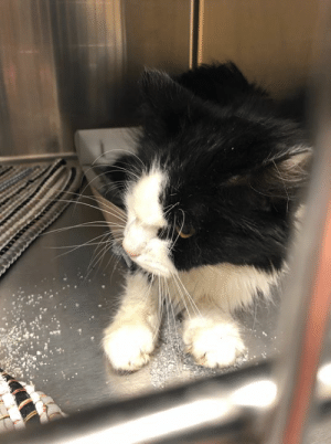 Memes, Sorry, and Appreciate: Update 4/5: Sadly, we still need $130 for vet bill and had to pay deposit. Vet bill estimate $300 total. Would greatly appreciate it if anyone chips in. Update 4/4: Very sorry and sad to report we had to let Alex go today. He was in pain, suffering, had declined since Wednesday. R.I.P. sweet Alex.😿🌈 Update 4/3: ALEX went to vet today and was found to be STARVING. Is on IV. Poor Alex is Severely Dehydrated, emaciated and in pain.  Possible Renal failure! Wendy, his foster, is taking excellent care of him and he will be going to N. Davidson vet in the morning. Please pray for him.  Here he is on heating pad.   We Need Pledges to pay getting him to the Vet  Please send pledges to:  savingrcaskitties@gmail.com  $300 goal for initial hospitalization. Alex (A117685). Rowan AC, Salisbury, NC