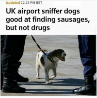 Aww what a good lil boy 😊😂 🍁Follow ➡ @weedsavage 🍁 weedsavage: Updated 12:23 PM BST  UK airport sniffer dogs  good at finding sausages,  but not drugs Aww what a good lil boy 😊😂 🍁Follow ➡ @weedsavage 🍁 weedsavage