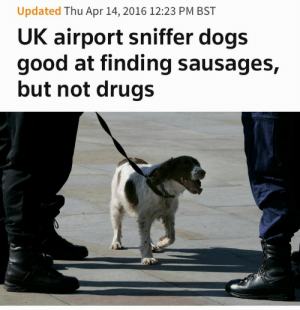 Dogs, Drugs, and Tumblr: Updated Thu Apr 14, 2016 12:23 PM BST  UK airport sniffer dogs  good at finding sausages,  but not drugs runwithskizzers:  divinedorothy:  Let Him Have The Sausages  i almost scrolled past this, like some kind of idiot