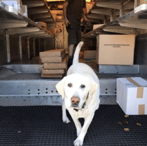 Dogs, Target, and Tumblr: ups-dogs:Buck is always super excited to see the UPS truck. 😍😍 Thanks Jaime