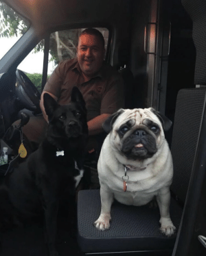 ups-dogs:David Dean from London, England with my two dogs Jess and Luna. Thank you for sharing Ellis: ups-dogs:David Dean from London, England with my two dogs Jess and Luna. Thank you for sharing Ellis