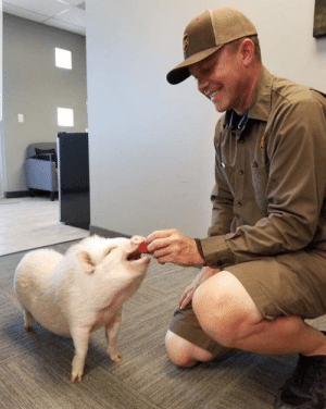 ups-dogs:Our Scottsdale Arizona UPS man and Peppa❤️: ups-dogs:Our Scottsdale Arizona UPS man and Peppa❤️