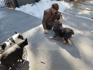 ups-dogs:Piper & Ruby the Frenchies & Augie the English Bulldog love their UPS guy, Wyatt.Thanks for considering.Meryle Fischer (proud doggositter)Durango, CO: ups-dogs:Piper & Ruby the Frenchies & Augie the English Bulldog love their UPS guy, Wyatt.Thanks for considering.Meryle Fischer (proud doggositter)Durango, CO