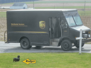 ups-dogs:  Rodger the Dachshund – waits to greet the UPS person… They always give him a treat and a pat on the head. Rodger seems to like the UPS driver…Parkesburg, PA.: ups-dogs:  Rodger the Dachshund – waits to greet the UPS person… They always give him a treat and a pat on the head. Rodger seems to like the UPS driver…Parkesburg, PA.