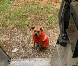 ups-dogs:  Sadie waiting for treats when her UPS guy comes to visit Ona, WV: ups-dogs:  Sadie waiting for treats when her UPS guy comes to visit Ona, WV