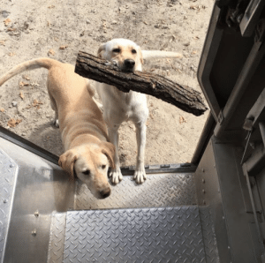 Dogs, Target, and Tumblr: ups-dogs:She always has to bring me a stick to play fetch and can't get enough. No stick to Big, no stick too small. The older one just wants the treats. North IowaThanks Curt