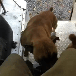 Dogs, Target, and Tumblr: ups-dogs:They find you even on break. Thank you Matthew