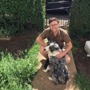 Dogs, Target, and Tumblr: ups-dogs:This is me (Lloyd) with a collie cross on my route in Gloucestershire.