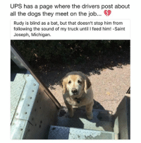 Dogs, Memes, and Ups: UPS has a page where the drivers post about  all the dogs they meet on the job...  Rudy is blind as a bat, but that doesn't stop him from  following the sound of my truck until I feed him! -Saint  Joseph, Michigan. 12-10 would give him all the treats