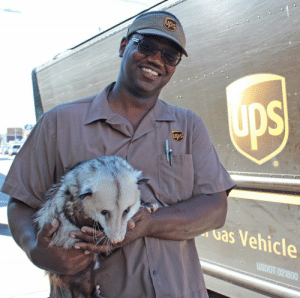 ups-dogs:Hi UPS Dogs!! Here is a photo of me, Sesame the Opossum, with my friend Joe in New Orleans, Louisiana. I'm so grateful that Joe is sweet to me!!! He's a true animal lover with a truck full of treats.: ups  uas Vehicle  USDOT 021800 ups-dogs:Hi UPS Dogs!! Here is a photo of me, Sesame the Opossum, with my friend Joe in New Orleans, Louisiana. I'm so grateful that Joe is sweet to me!!! He's a true animal lover with a truck full of treats.