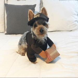 ups-dogs:Hello!This is my pup Tripp, he is 8 and his mom Julie works for UPS in Florida!: ups ups-dogs:Hello!This is my pup Tripp, he is 8 and his mom Julie works for UPS in Florida!