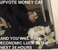 Me irl: UPVOTE  MONEY CAT  AND YOU WILL HAVE  ECONOMIC LUCK İNTHE  NEXT 24 HOURS Me irl