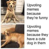 Cute, Funny, and Memes: Upvoting  memes  because  they're funny  Upvoting  memes  because they  have a cute  dog in them Investing right meow! via /r/MemeEconomy https://ift.tt/2Pvxwfl
