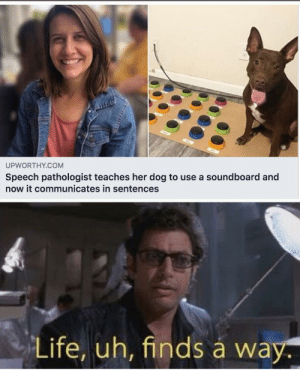 We really are moving into the next era of technology: UPWORTHY.COM  Speech pathologist teaches her dog to use a soundboard and  now it communicates in sentences  Life, uh, finds á way. We really are moving into the next era of technology