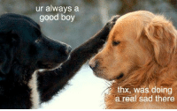 Confidence, Good, and Sad: ur always a  good boy  thx, was doing  a real sad there <p>Doggo&rsquo;s confidence booster</p>