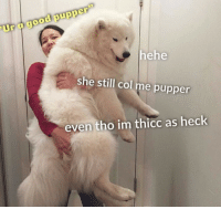 "Good, Hope, and Day: Ur e good pupper""  ehe  she still col me pupper  even tho im thicc as heck I hope everyone's having a great day"