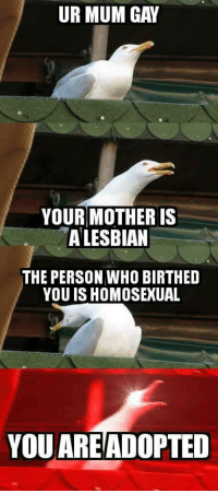 """Dank, Meme, and Http: UR MUM GAY  YOUR MOTHER IS  A LESBIAN  THE PERSON WHO BIRTHED  YOU IS HOMOSEXUAL  YOU AREADOPTED <p>Can&rsquo;t beat that via /r/dank_meme <a href=""""http://ift.tt/2u7mdo8"""">http://ift.tt/2u7mdo8</a></p>"""