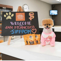 Food, Memes, and Summer: UR  WELCOME  TO  SAN FRANCISCO  SIFFPOMC Living large on the road w- @Naturesrecipe pet food. Become a VI-Pup at select @ResidenceInn locations this summer. Visit FuelTheWag.com-travel for more travel tips 😎 FuelTheWag sponsored