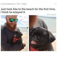 Memes, Beach, and Imgur: ures . 5d imgur  u/clownfeat  Just took Abe to the beach for the first time.  I think he enjoyed it.  @DrSmashlove (@dogsbeingbasic) is a wonderfully adorable account for doggo-lovers.