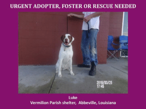 *Please note this animal is not with AAVA - we are networking for rescue as the liaison for the shelter* This baby is in a kill shelter in Abbeville, LA which does not allow public adoptions. Animals must be pulled by an approved rescue or can be adopted through AAVA.  TO ADOPT - fill out an application at http\://aavarescue.com/adoptions.php  RESCUES - all rescues must now go through AAVA. Please contact us at animalaidvermilion@gmail.com. If you are not already approved please fill out a rescue application at http\://aavarescue.com/rescues.php  TO FOSTER - fill out an application at http\://aavarescue.com/volunteer.php  If you have any questions please contact us at animalaidvermilion@gmail.com or (337) 366-0212 or visit our website http\://aavarescue.com for more information.  To donate to AAVA's general rescue fund which helps support the shelter animals needs visit this link http\://paypal.me/animalaidvermilion or visit our website http\://aavarescue.com/support-our-rescue.php Shelter needs can include items such as laundry detergent, baby pools, flea medication, dawn soap, heaters and fans, toys, gas for transports, pull fees for unfunded animals, and other types of items.: URGENT ADOPTER, FOSTER OR RESCUE NEEDED  91800125  2019/03/25  17:45  Luke  Vermilion Parish shelter, Abbeville, Louisiana *Please note this animal is not with AAVA - we are networking for rescue as the liaison for the shelter* This baby is in a kill shelter in Abbeville, LA which does not allow public adoptions. Animals must be pulled by an approved rescue or can be adopted through AAVA.  TO ADOPT - fill out an application at http\://aavarescue.com/adoptions.php  RESCUES - all rescues must now go through AAVA. Please contact us at animalaidvermilion@gmail.com. If you are not already approved please fill out a rescue application at http\://aavarescue.com/rescues.php  TO FOSTER - fill out an application at http\://aavarescue.com/volunteer.php  If you have any questions please contact us at animalaidvermilion@gmail.com or (337) 366-0212 or visit our website http\://aavarescue.com for more information.  To donate to AAVA's general rescue fund which helps support the shelter animals needs visit this link http\://paypal.me/animalaidvermilion or visit our website http\://aavarescue.com/support-our-rescue.php Shelter needs can include items such as laundry detergent, baby pools, flea medication, dawn soap, heaters and fans, toys, gas for transports, pull fees for unfunded animals, and other types of items.