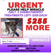 "Doctor, Journey, and Memes: URGENT  PLEASE HELP MIRACLE  ONLY 2 CHEMOTHERPAY  TREATMENTS LEFT- $355 EACH  $255  MORE  Miracle Medical Treatment  MIRACLE  $$4,745 ,00red  DONATE DIRECTLY TO HER FUND  AT NEWS SECTION  WWW.NYBULLYCREW.ORG MIRACLE UPDATE‼️ ONLY $255 more🙏 Please help us continue to help her by donating here: https://goo.gl/6FQDbK **You can also Venmo @newyorkbullycrew or PayPal to newyorkbullycrew@gmail.com and earmark your donation in notes ""For Miracle""  Our survivor from Nepal, was supposed to have her final chemo session yesterday however, her white blood count was low and the doctors felt it best to wait. We still need to meet Miracle's treatment goal which does not include the additional exam/bloodwork as a result of treatment being postponed until next week. The doctor is hopeful next week will show better blood counts and Miracle can have her final treatment🙏 Help us help our girl be cured of her TVT and complete her journey to health and happiness! Please keep her in your thoughts and prayers. Thank you!! #miraclenybc #savethemall #nybc #newyorkbullycrew  #kickcancersass"