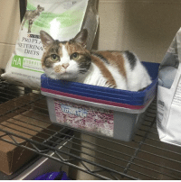URIN  PROP  DIETS  A HYDRO LY imma just gonna relax here. . . On a shelf . . . In these clean kitten litter boxes. #Callie #GHACvet #SeniorFoster