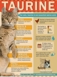 Cats, Memes, and Brain: URINE  For cats, taurine is an essential amino acid.  O EYES  Taurine is found almost  exclusively in meat and  Deficiency can lead to  blindness  seafood.  BRAIN &  NERVES  Taurine plays many roles  in nerve and cell function  Taurine crosses the blood-  brain barrier.  The harder a HEART  muscle works  the more  taurine it  contains.  LEG  THIGH  BREAST  Taurine is water soluble.  Don't discard the liquid  from thawed raw foods!  HEART  Deficiency can cause  cardiomyopathy and  death.  It takes many  months or years  for symptoms of  DIGESTION  Combines with bile acids  for proper digestion.  a deficiency to  show up.  It's a good idea to add  extra taurine to your  cat's raw meat diet.  IMMUNE  FUNCTION  Taurine affects immune  system responsiveness.  FETAL  DEVELOPMENT  feline  Deficiency can cause stillbirths,  low birth weights and birth  defects in kittens.  nutrition  FOUNDATION  For more info, visit  FelineNutritionFoundation.org