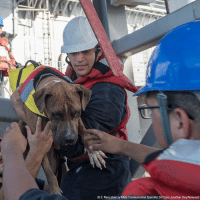 Dogs, Memes, and Navy: US. Navy photo by Mass  Specialist 3rd Class Jonathan Clay/Released) Two Hawaiian mariners and their two dogs were rescued by the @USNavy on October 25 after they were stranded in the Pacific Ocean for several months.