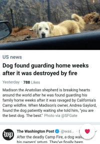 "Dog = unconditional love: US news  Dog found guarding home weeks  after it was destroyed by fire  Yesterday 788 Likes  Madison the Anatolian shepherd is breaking hearts  around the world after he was found guarding his  family home weeks after it was ravaged by California's  Camp wildfire. When Madison's owner, Andrea Gaylord,  found the dog patiently waiting she told him, 'you are  the best dog. The best."" Photo via@SFGate  The Washington Post @was... [  up  After the deadly Camp Fire, a dog wan  his owners' return Thev've finally been Dog = unconditional love"