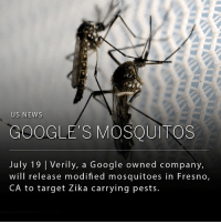 Future, Google, and Life: US NEWS  GOOGLE'S MOSQUITOS  July 19 | Verily, a Google owned company,  will release modified mosquitoes in Fresno,  CA to target Zika carrying pests Verily, Google's life sciences branch, is able to produce bacteria-infected mosquitos that target other invasive species of mosquitos. When the male mosquitoes mate with females, the Wolbachia bacteria causes the female to produce eggs that never hatch - eliminating future generations of the virus carrying pests. Male mosquitoes don't bite so they won't bother anyone or spread diseases.