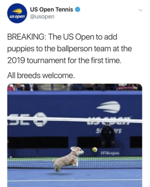 oh my god: US Open Tennis  @usopen  us open  BREAKING: The US Open to add  puppies to the ballperson team at the  2019 tournament for the first time  All breeds welcome oh my god