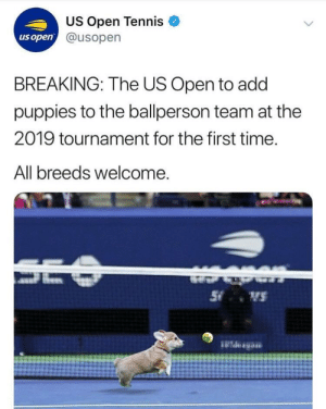 awesomacious:  Watch out, they comin for your tennis balls: US Open Tennis  @usopern  us open  BREAKING: The US Open to add  puppies to the ballperson team at the  2019 tournament for the first time.  All breeds welcome awesomacious:  Watch out, they comin for your tennis balls