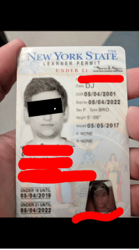 """New York, Sex, and Tumblr: USA  NEW YORK STATE  LE ARNER PERMIT  Class  DOB 05/04/2001  Expires 05/04/2022  Sex F Eyes BRO  Height 5'-06""""  Issued 05/05/2017  E NONE  R NONE  UNDER 18 UNTIL  05/04/2019  UNDER 21 UNTIL  05/04/2022 <p><a href=""""http://memehumor.net/post/171602057778/my-friend-got-his-permit-with-his-name-wrong-and"""" class=""""tumblr_blog"""">memehumor</a>:</p>  <blockquote><p>My friend got his permit with his name wrong and his gender wrong</p></blockquote>"""
