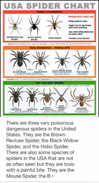 """Spider Information: USA SPIDER CHART  DEADLY & DANGEROUS  SPIDER BITE FIRST AID  Keep patient calm  Apply ice to decrease  pain and swelling  Use anti-inflammatories.  for pain relief  BROWN RECLUSE  BLACK waDow  HOBO SPIDER  Contact your doctor  SPIDER  SPIDER  NOTICE MALE SPIDERS HAVE A  SMALLERABDOMEN, LONGER LEGS  SWOLLEN PALPS FOR REPRODUCTION)  TOXIC (POISONOUS) PAINFUL BITE  FEMALE  BLACK HOUSE SPIDER  MOUSE SPIDER  MOUSE SPIDER  WOLF SPIDER  WARNING MOST OF THESE SPIDERS CAN BEDANGEROUS TO PEOPLE WITH ALLERGIES OR HYPER SENSETIVITIES  THE """"LOW RISK"""" SPIDERS  DANGER-CALL FUMAPE5  SPIDERS CAN BEBENEFICIALIN THE CONTROLOF MOSQUITOES& FLES. BUT IF THEY PRESENT  GARDEN  ANDREW'S  FEMALE  HUNTSMAN  TRAP-DOOR  TRAP-DOOR  ORB-WEAVING  CROSS   There are three very poisonous  dangerous spiders in the United  States. They are the Brown  Recluse Spider, the Black Widow  Spider, and the Hobo Spider.  There are also some species of  spiders in the USA that are not  as often seen but they are toxic  with a painful bite. They are the  Mouse Spider, the B Spider Information"""