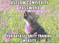 Baby, It's Cold Outside, Complex, and Lowes: USE LOW COMPLEXITY  PASSWORD  FOR DATA SECURITY TRAINING  WEBSITE  net Baby insanity wolf