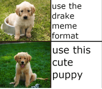 cute puppy: use the  drake  meme  format  use this  cute  puppy