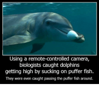 Dank, 🤖, and Puffer Fish: Using a remote-controlled camera,  biologists caught dolphins  getting high by sucking on puffer fish.  They were even caught passing the puffer fish around Duuuuuude!
