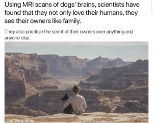 Brains, Dogs, and Family: Using MRI scans of dogs' brains, scientists have  found that they not only love their humans, they  see their owners like family.  They also prioritize the scent of their owners over anything and  anyone else.  er  Gredit: Patrick Hend awesomacious:  That explains….a lot