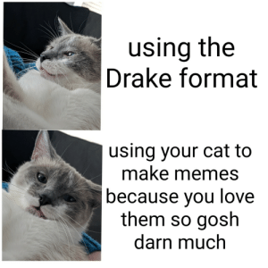 Drake, Love, and Memes: using the  Drake format  using your cat to  make memes  because vou love  them so gosh  darn much awesomacious:  Got taken off of r/memes, so I hope this fits here