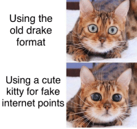Cute, Drake, and Fake: Using the  old drake  format  Using a cute  kitty for fake  internet points KittyDrake